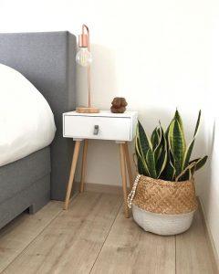 kamerplanten slaapkamer - aloe vera
